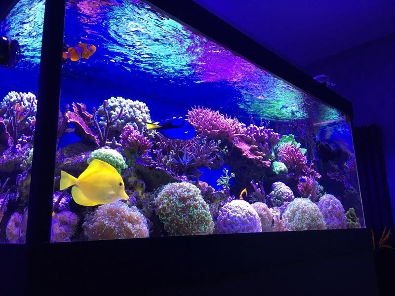 Mon nouveau reef 600 L Img_1311