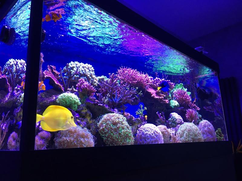 Mon nouveau reef 600 L Img_1312