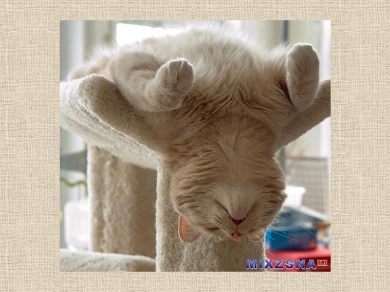 HUMOUR : le chat dans tous ses états - Page 6 0_chat11