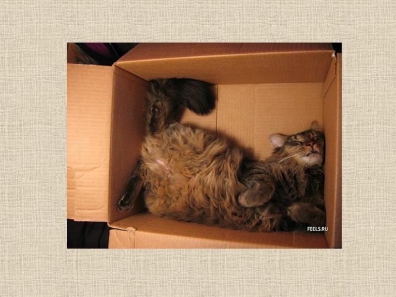HUMOUR : le chat dans tous ses états - Page 6 0_chat12