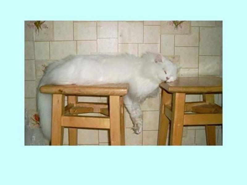 HUMOUR : le chat dans tous ses états - Page 6 0_chat13