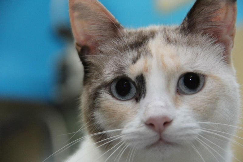 Les chats du Refuge de CEUTA en Espagne 22354410
