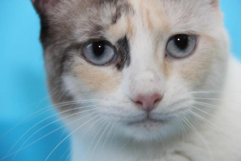 Les chats du Refuge de CEUTA en Espagne 28920_10