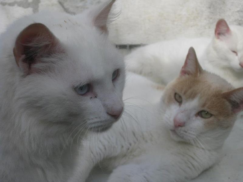 Les chats du Refuge de CEUTA en Espagne 52991410