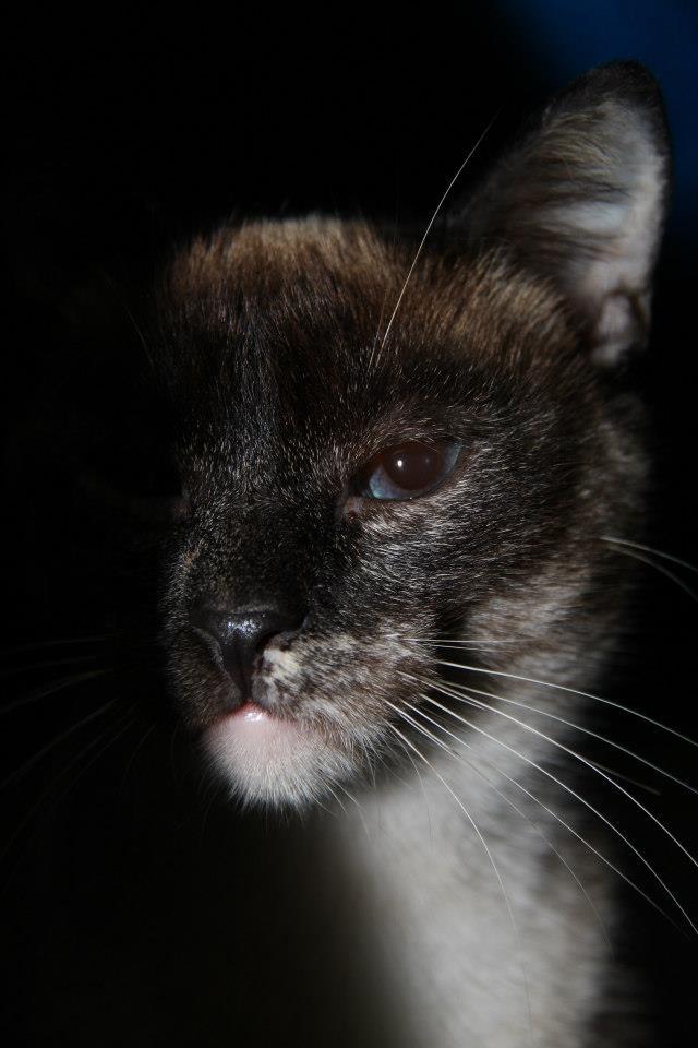 Les chats du Refuge de CEUTA en Espagne 54774410