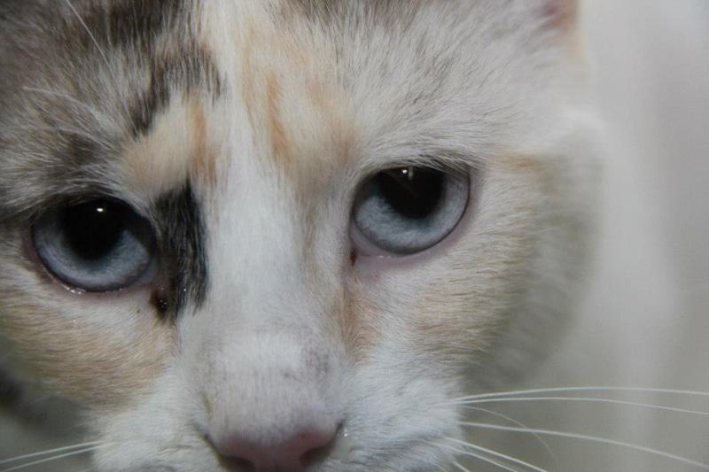 Les chats du Refuge de CEUTA en Espagne 69667_10