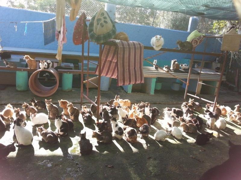 Les chats du Refuge de CEUTA en Espagne Au20so10