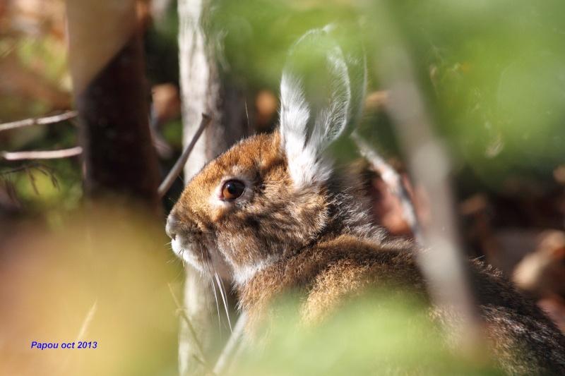 un rabbit, deux rabbits Papou_28