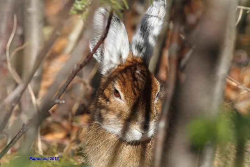 un rabbit, deux rabbits Papou_29