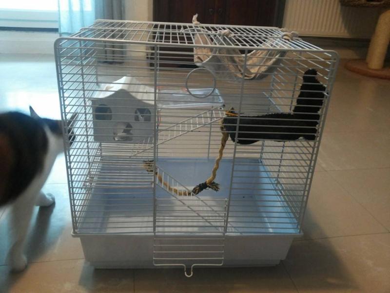 Que mettre dans sa cage, cette cage  14630610