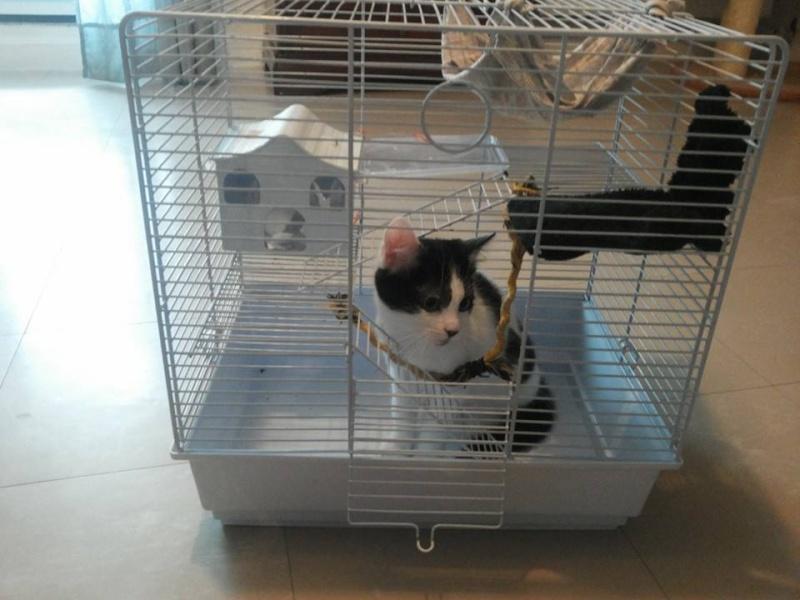 Que mettre dans sa cage, cette cage  14712910
