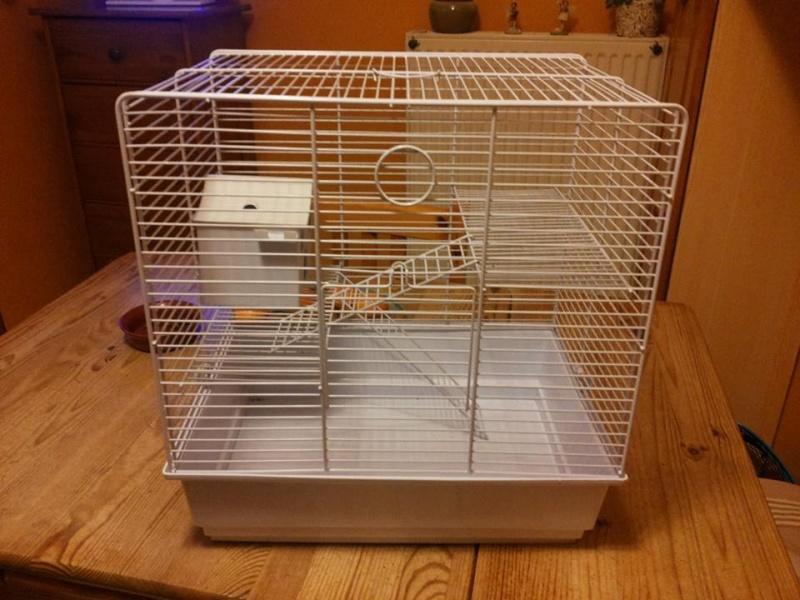 Que mettre dans sa cage, cette cage  99858110