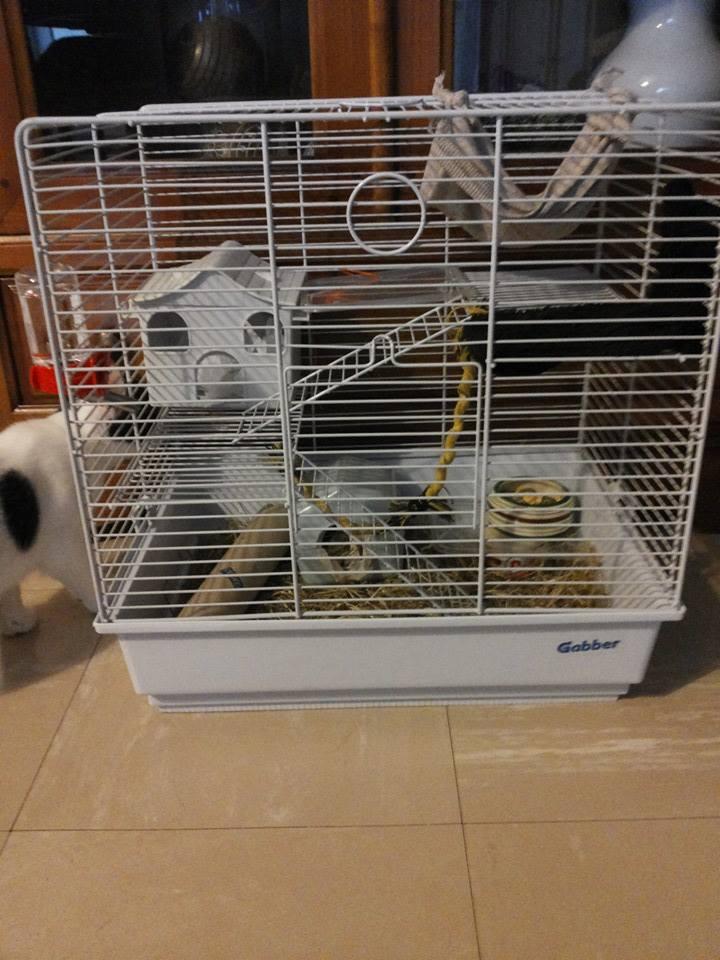 Que mettre dans sa cage, cette cage  Cage_f10