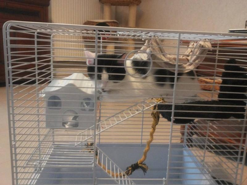 Que mettre dans sa cage, cette cage  Tinky10