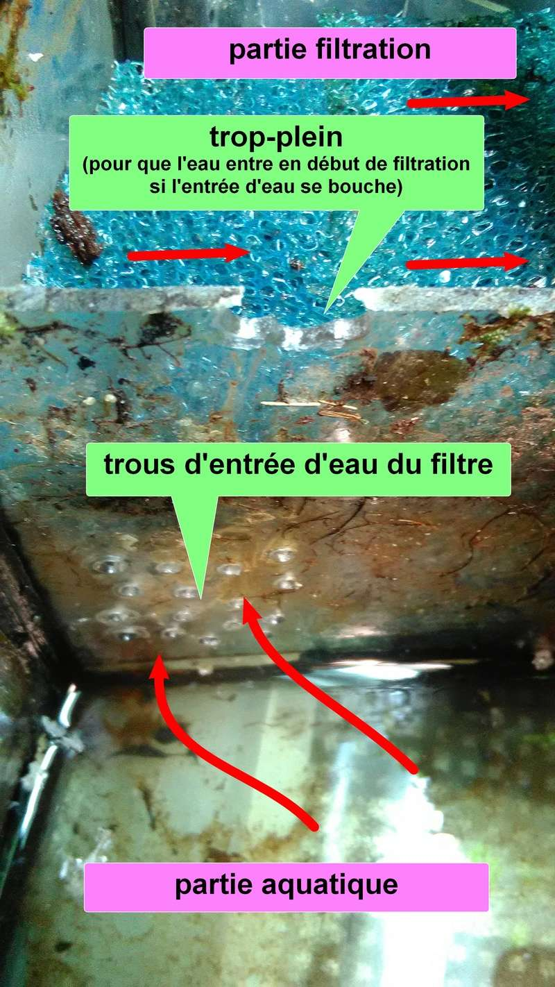 L'aquaterrarium de Janine (Kinosternon baurii) Img_2013