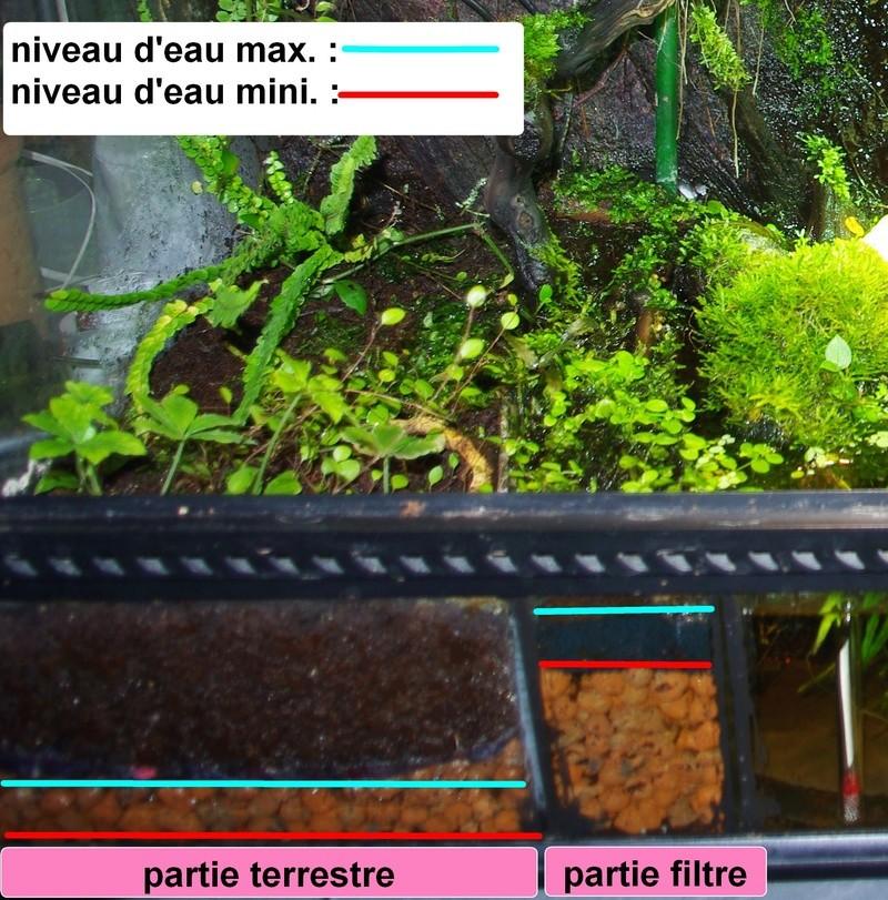 L'aquaterrarium de Janine (Kinosternon baurii) Imgp7811