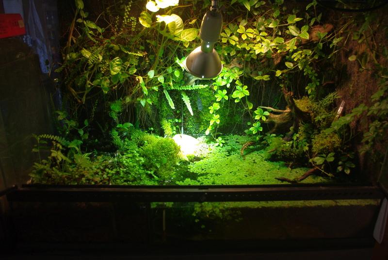 L'aquaterrarium de Janine (Kinosternon baurii) Imgp7911