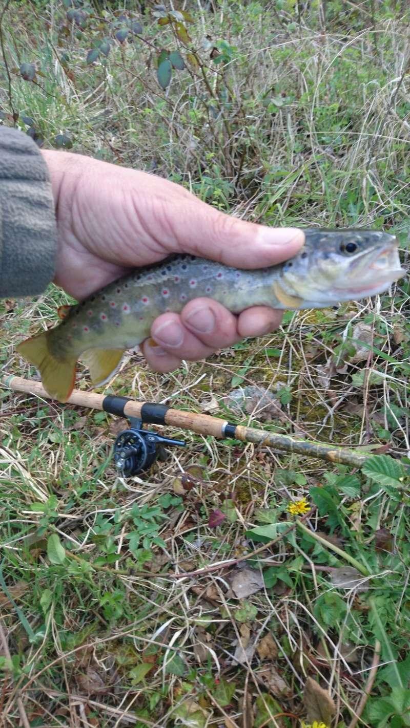 Votre pêche salmo d'Avril Dsc_1528