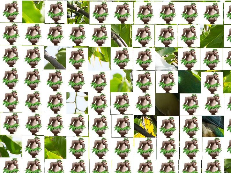 oiseau Martin 6 avril trouvé par Martine Oiseau18