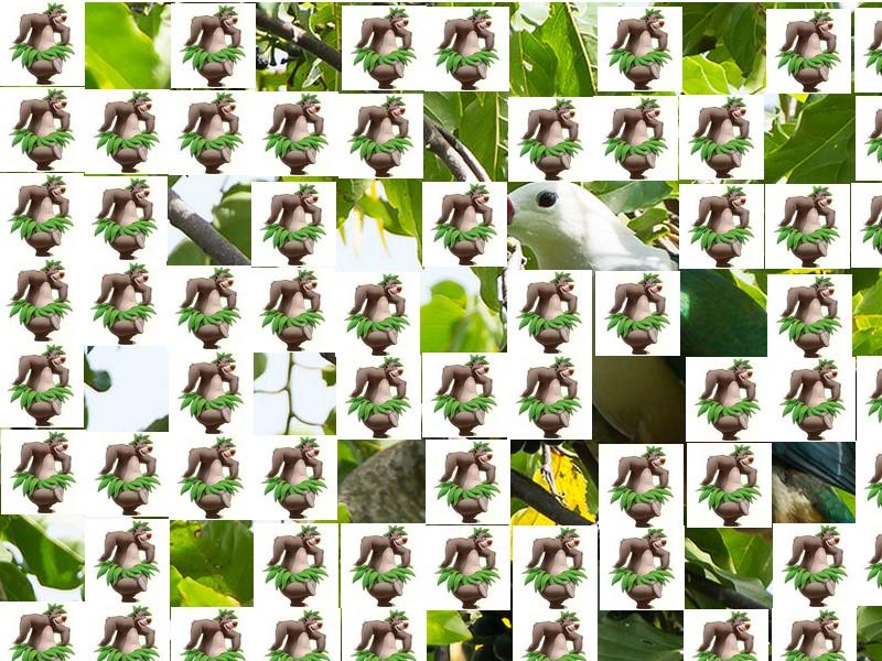 oiseau Martin 6 avril trouvé par Martine - Page 2 Oiseau20