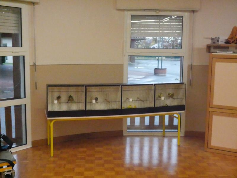 Ecoles de Muret P1010012