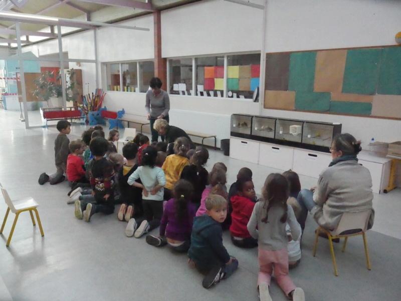 Ecoles de Muret P1010016