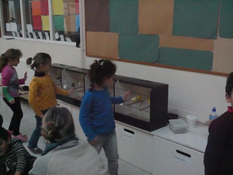 Ecoles de Muret P1010020