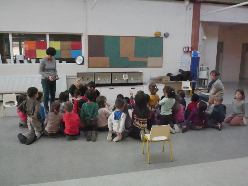 Ecoles de Muret P1010021