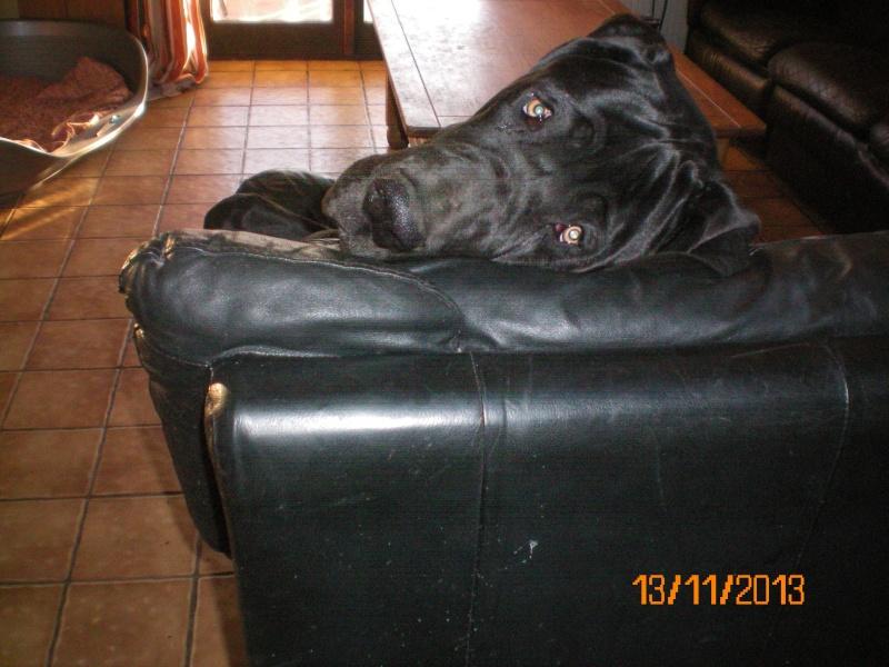 """Photos de vos chiens """"malheureux"""" 100_0025"""