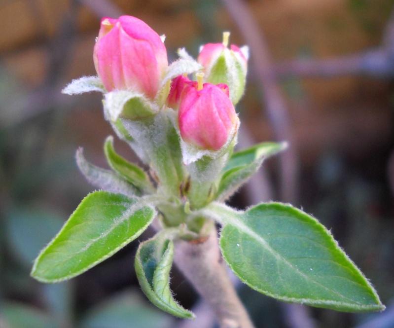 prime fioriture stagionali Dscn3112