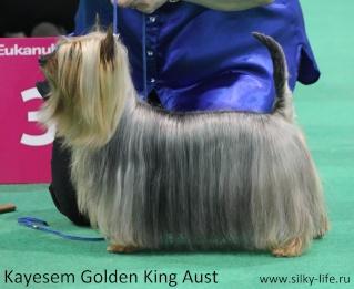 Кayesem Golden King Aust (Джонник) - Страница 4 Img_0711