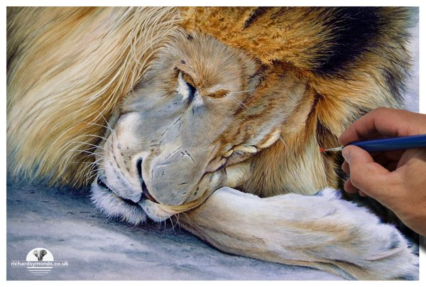 LES PEINTURES ANIMALIERES DE RICHARD SYMONDS Csvowp10