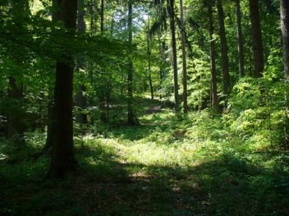 Comme un qui s'est perdu dans la forest profonde - Etienne Jodelle Comme_10