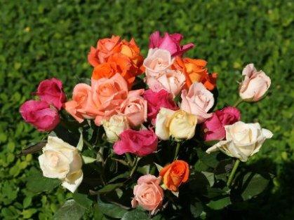 Je vous envoye un bouquet que ma main - Pierre de Ronsard Je_vou11