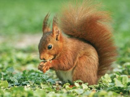 L'écureuil - Paul Fort L_acur10