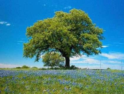 L'arbre - Emile Verhaeren L_arbr10