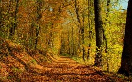 L'automne - Alphonse de Lamartine L_auto10