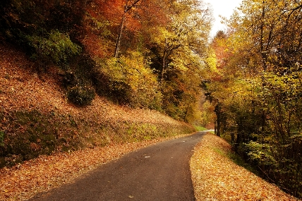 L'automne - Anna de Noailles L_auto11