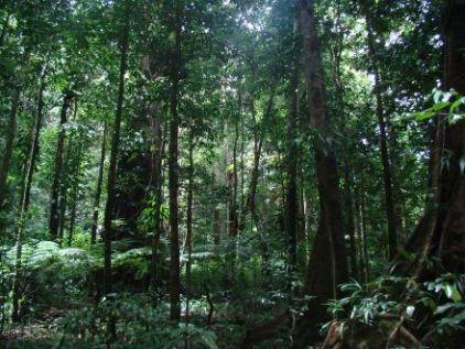 La forêt vierge  - Charles Leconte de Lisle La_for10