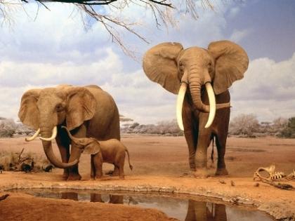 Les éléphants - Charles Leconte de Lisle Les_al11