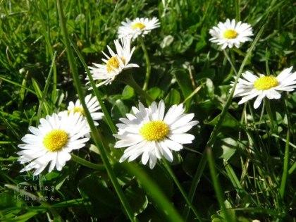 Premier sourire du printemps - Théophile Gautier Premie10