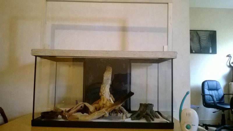 aménagement de mon aquarium en terra (provisoire!) Wp_20114