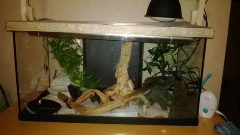 aménagement de mon aquarium en terra (provisoire!) probleme de chauffage^^ help! Wp_20125