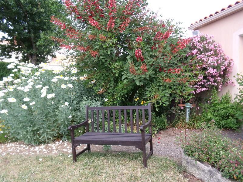 ces quelques fleurs de nos jardins - Page 4 Jardin11