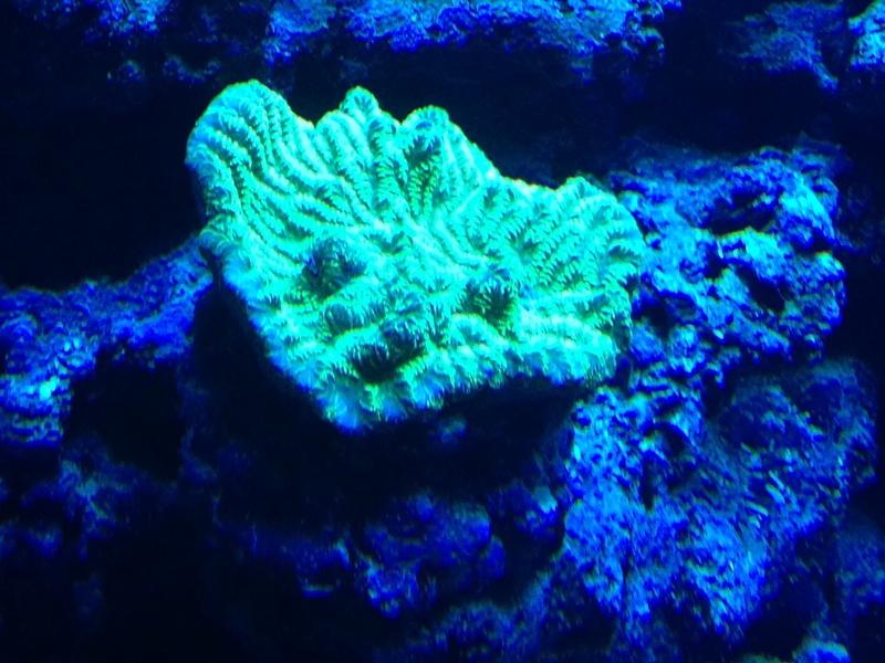 Mon récif Noeil2004 4wql10
