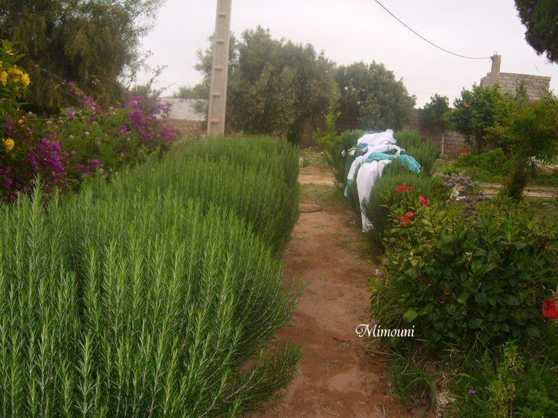Mes photos de vacances : landing succes in Ouled mimoune Mimoun17