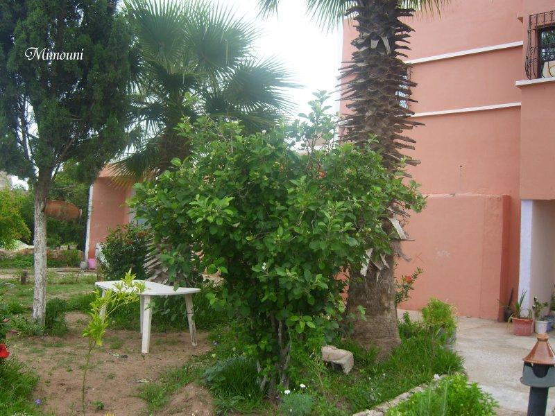 Mes photos de vacances : landing succes in Ouled mimoune Mimoun19