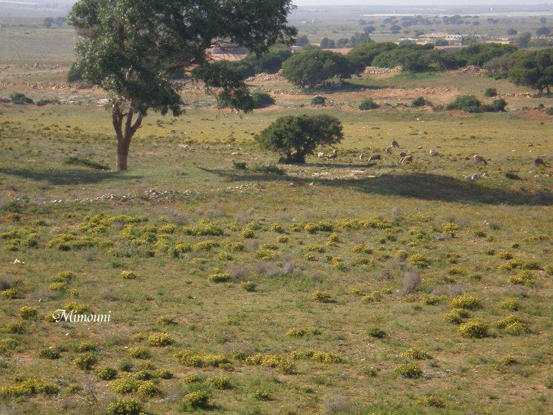 Mes photos de vacances : landing succes in Ouled mimoune Mimoun24