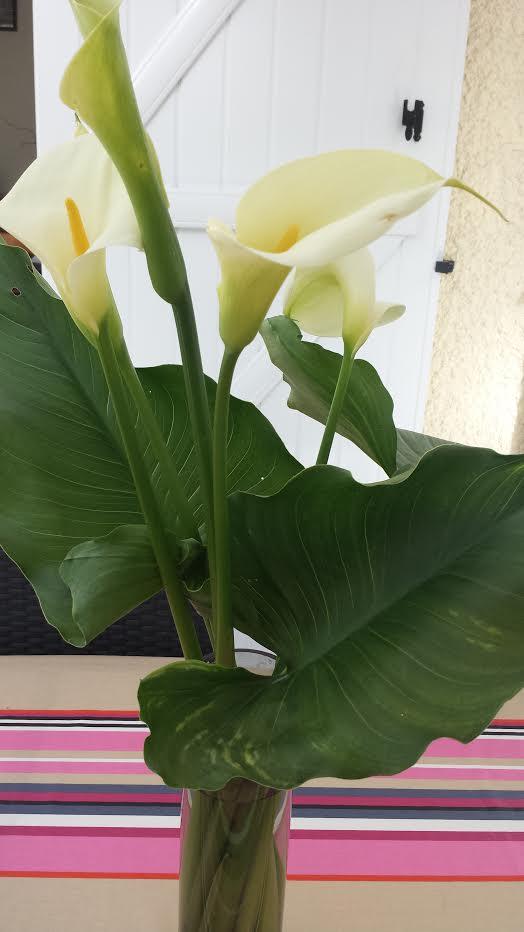 MAI : Rosée de mai, verdit les près - Page 12 Arum_p10