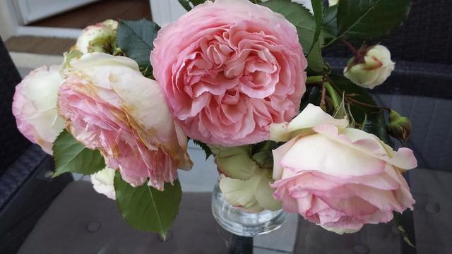MAI : Rosée de mai, verdit les près - Page 12 Roses_10